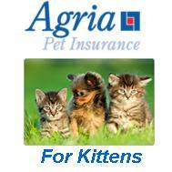 Agria Kitten Insurance - 4 weeks free with vaccinations