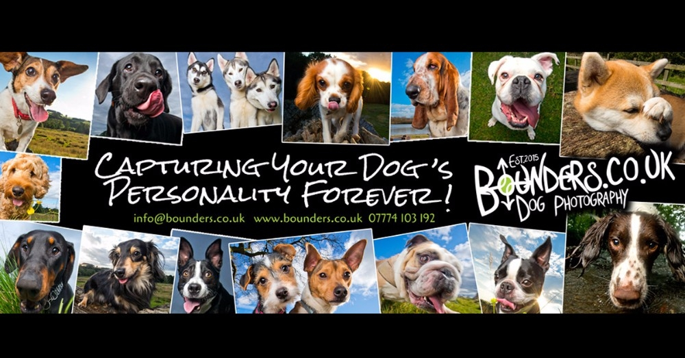 BOUNDERS DOG PHOTOGRAPHY - Capturing Your Dog's Personality Forever!!