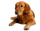 The Bearwood Veterinary Clinic - Pet Care Plan for dogs