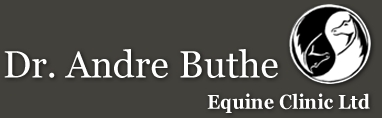 Dr Andrew Buthe Equine Clinic