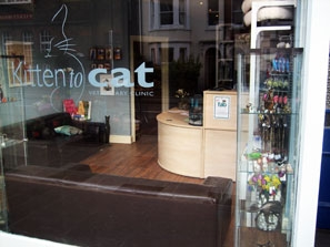 Kitten to Cat Vets in Kew - Cat toys and gifts