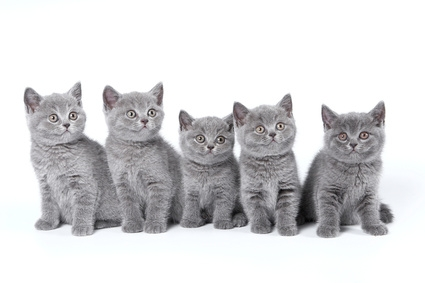 Williams and Cummings Vets in Sunderland - Lifetime Vaccination Plan for cats
