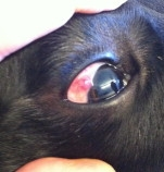 House and Jackson Veterinary Surgeons  - Eye Referrals