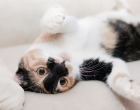 Maypole Veterinary Centre in Maypole - Pet Care Plan for cats