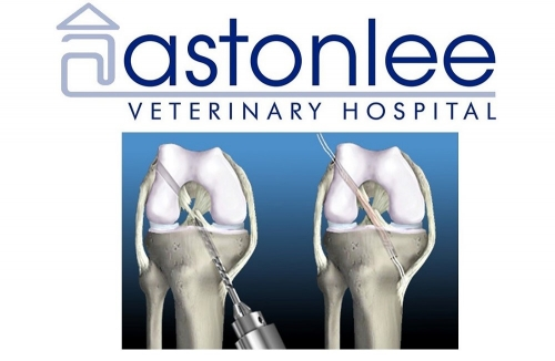 Canine Cruciate Surgery: Natural Graft Technique - Astonlee Veterinary Hospital