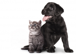 Backwell Veterinary Centre  - Pet Health Plan for Cats