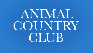 Animal Country Club in Essex - Puppy Training
