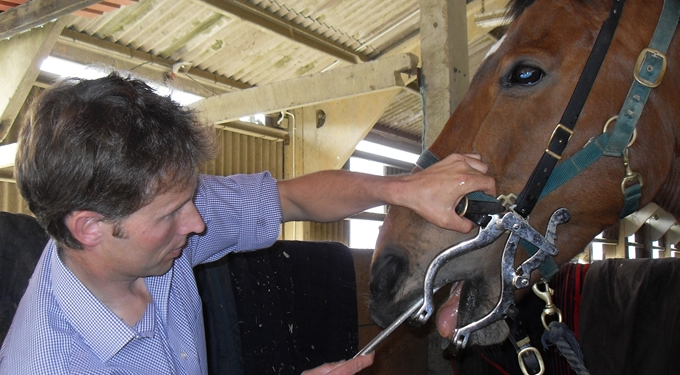 Milbourn Equine in Kent - Dentistry