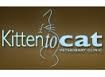 Kitten to Cat Veterinary Clinic in Kew - Health Club