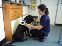 Cinque Ports Vets - Wye  Veterinary Surgery - Microchipping