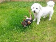 Dog Training in Fife - Puppy Socialisation Classes