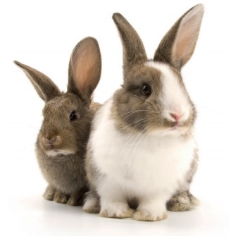 Priory Vets in Westgate - Rabbit Health Club