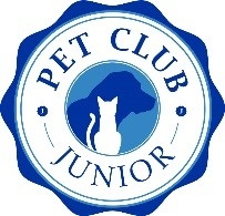 Kitten - Junior Pet Club Offer - Avonvale Veterinary Centres - Warwickshire