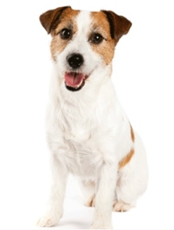 Andale Veterinary Centre - Medium Dog Health Club – 10kg to 25kg